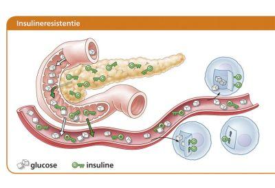 schommelingen in bloedsuikerspiegel